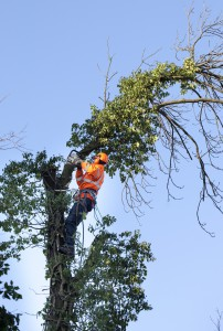 danger et scurit en arboriculture